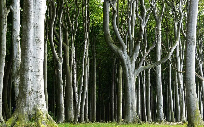 gespensterwald6