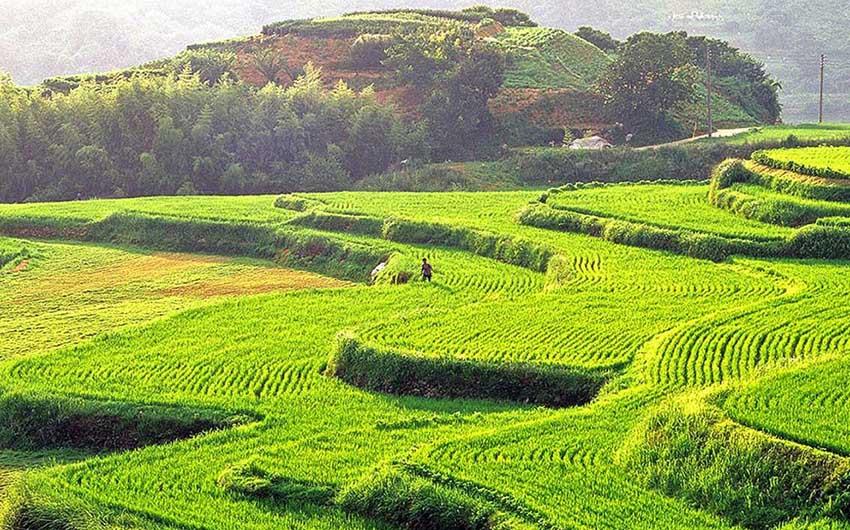 مزارع